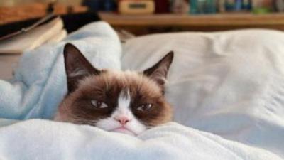 Bu Sosyal Ağda Kediye Doyacaksınız